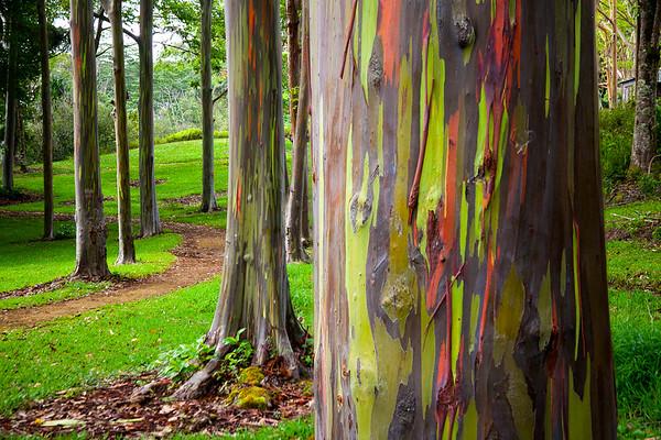 John_Ballard-Rainbow_Trees