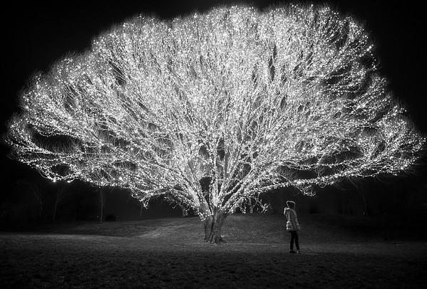Jason_Cameron-tree4c3bw-smol