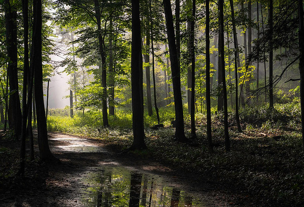 Peter_Salm_Forest Walk