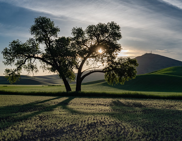 Jim_Roach-Palouse_Tree jpg
