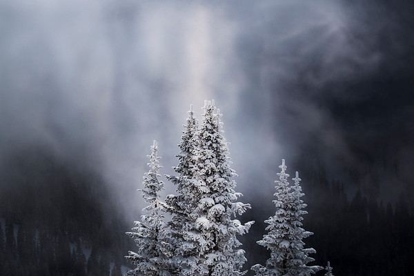 Peter_Hines-Winter_Trees_In_Crystal_Light