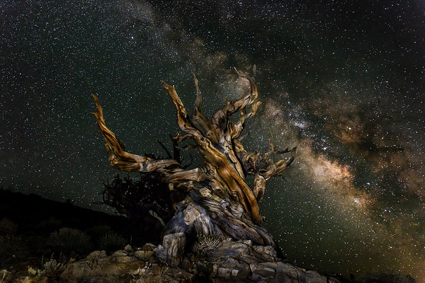 Peter_Hines-Ancient_Bristlecone_Pine_Under_The_Milkyway