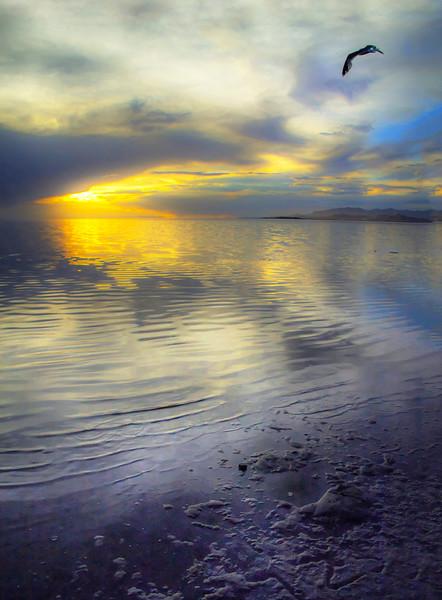 sean_camp-salt_lake_seagull_sunset