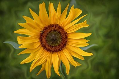 Sunflowers are fun