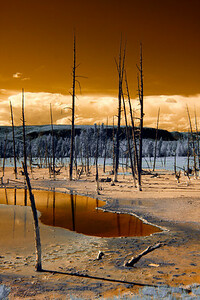 Yellowstone in Gold