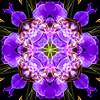 Kaleidoscope Iris