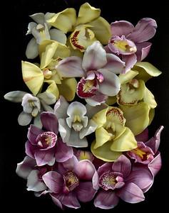 A Symphony of Orchids - Catalog #3017