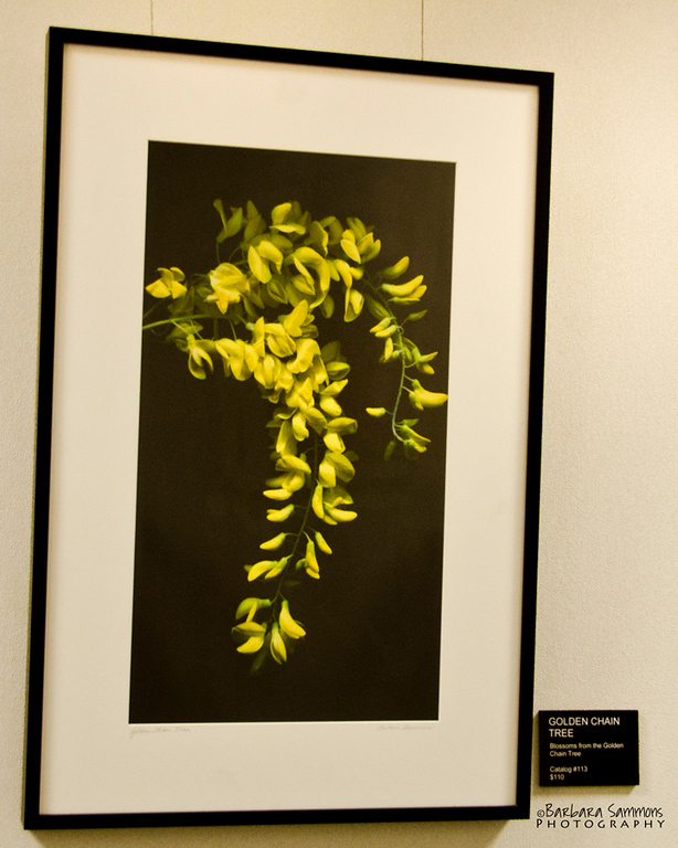 """Golden Chain Tree""<br /> Hallway - around corner from main gallery"