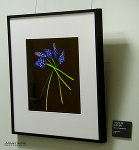 """Muscari Twists"" Hallway - around corner from main gallery"