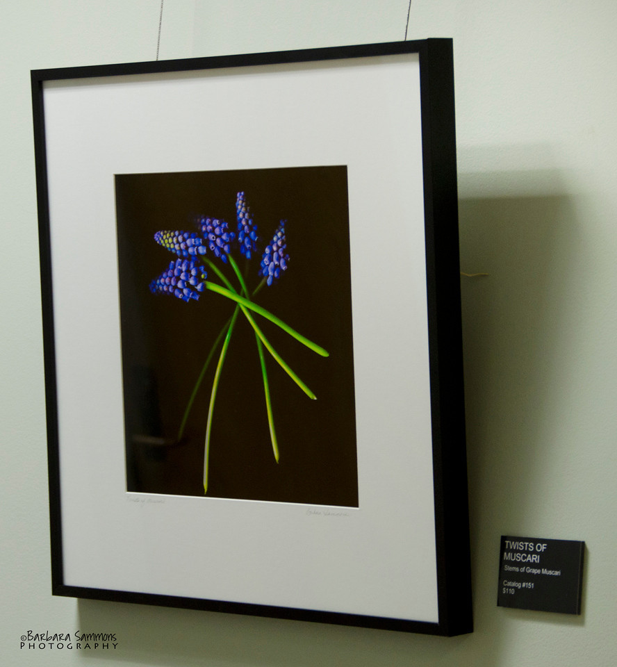 """Muscari Twists""<br /> Hallway - around corner from main gallery"