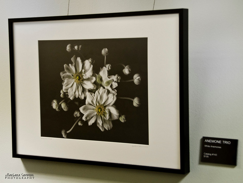 """Anemone Trio""<br /> Hallway - around corner from main gallery"