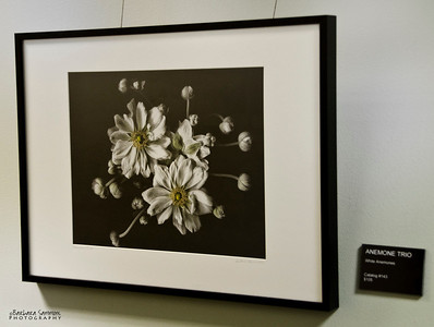 """Anemone Trio"" Hallway - around corner from main gallery"
