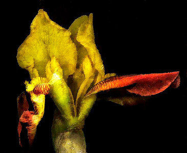Catalog #3005 - Bronze - Iris