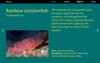 Interactive Exhibit<br /> California Academy of Sciences<br /> March 2020