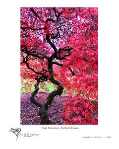 Hoyt Arboretum, Portland Oregon