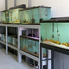 "A new aquatic pet store will open soon on Main Street in Fitchburg ""Exotic Aquatics.""  SENTINEL & ENTERPISE/JOHN LOVE"