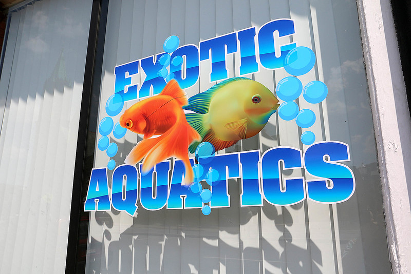 "A new aquatic pet store will open soon on Main Street in Fitchburg called ""Exotic Aquatics."" SENTINEL & ENTERPISE/JOHN LOVE"