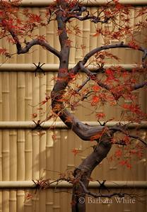 Fence At Arashiyama