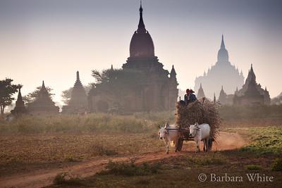 Hay Cart in Bagan
