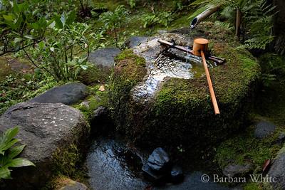 Chozubachi In Nezu Garden