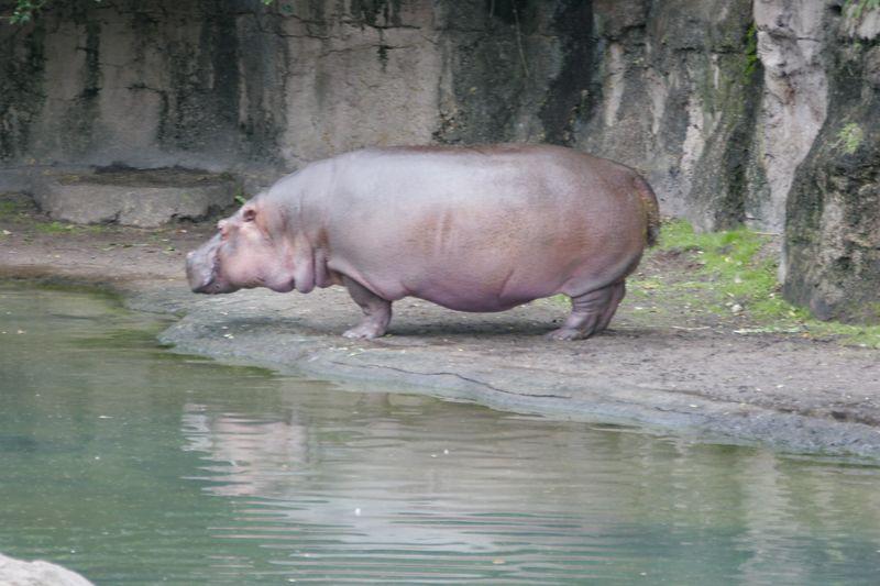 Animal Kingdom 2005 -055