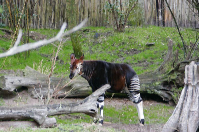 Animal Kingdom 2005 -003