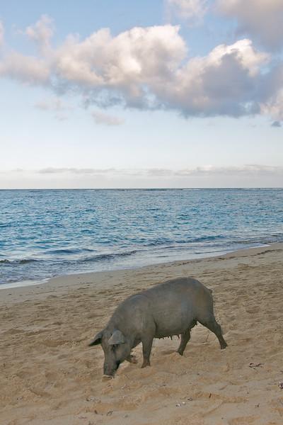 Playa Maguana