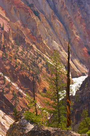 Grand Canyon of the Yellowstone Color