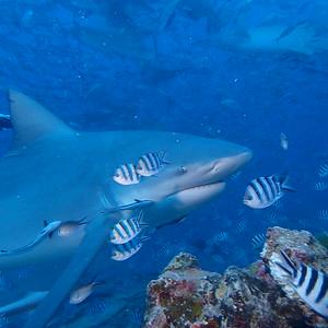 2015 Shark Dive