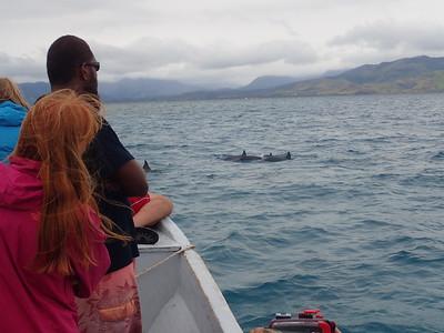 2016 Dolphin & Moon Reef