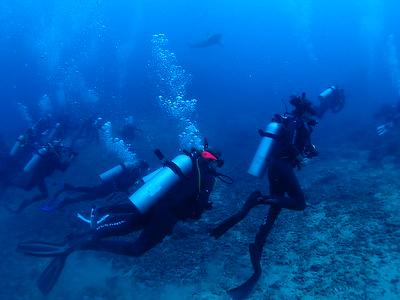 2016 Sharky Dive