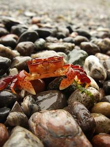 Wildlife on a San Juan Island beach. Photo by Grays Harbor Historical Seaport Authority.
