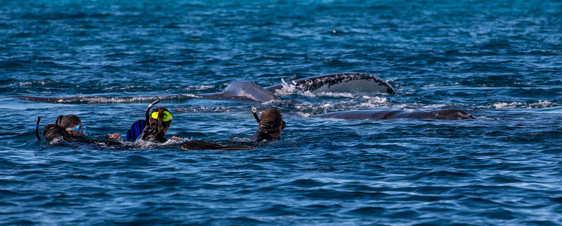 Swimming With Humpback Whales