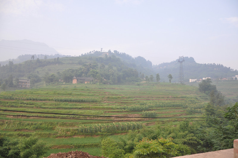 The area in which the tracksite is located is in a farming area -- more or less any available surface has been commuted for farming purposes.  Because the hillsides tend to be very steep, they have been terraced to create flat, water-retention basins in which rice and other crops can be grown.  Here's just such a terraced hillside.