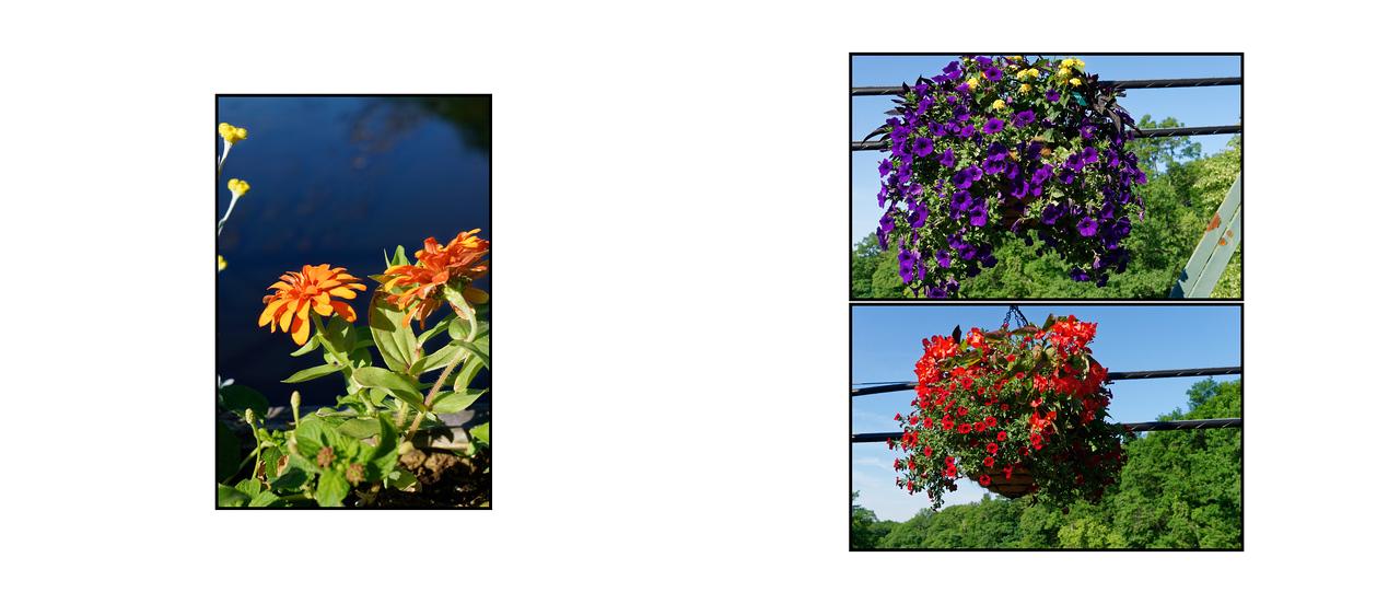 Flower_Bridge_June_2016_09