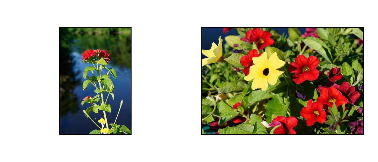 Flower_Bridge_June_2016_14