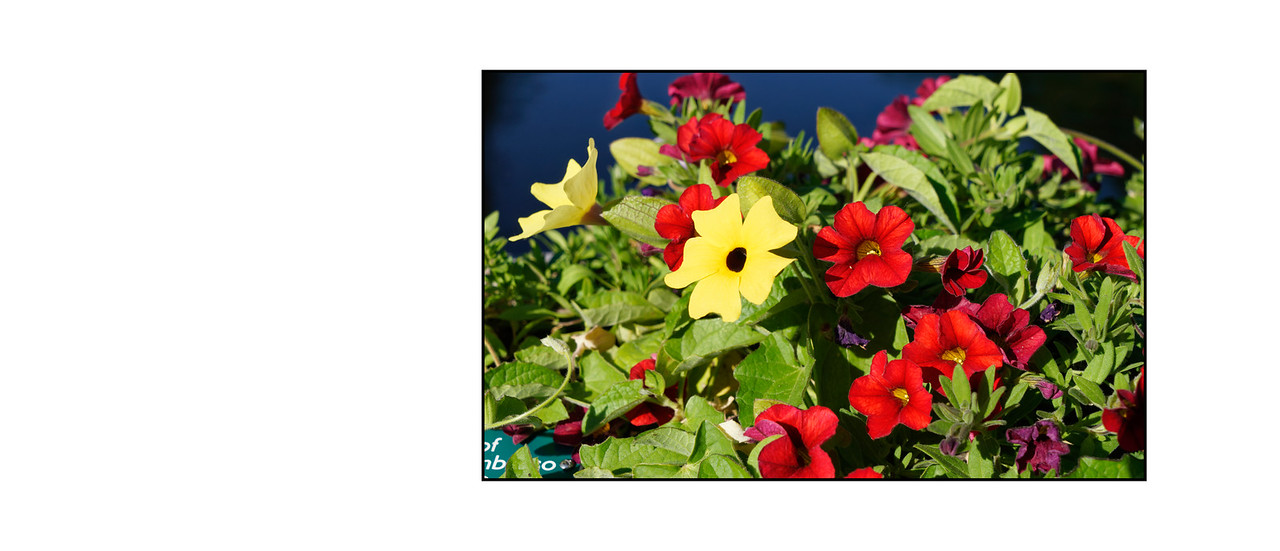 Flower_Bridge_June_2016_13