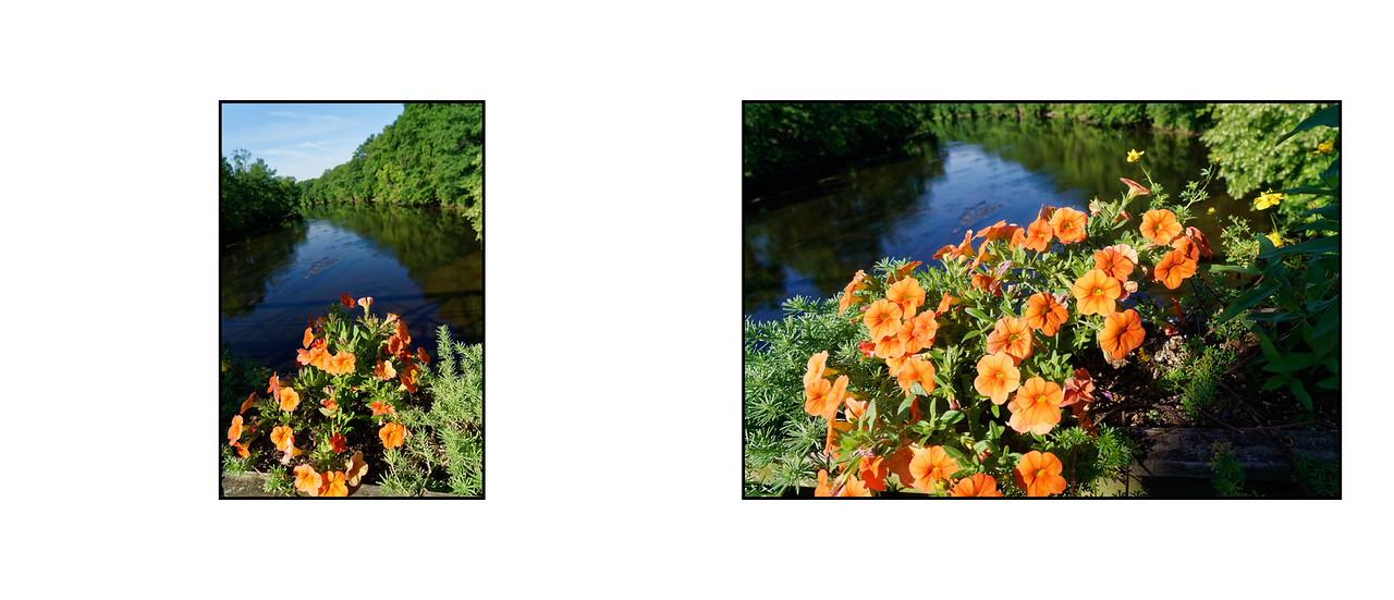 Flower_Bridge_June_2016_08