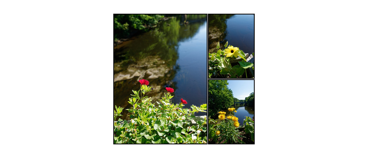 Flower_Bridge_June_2016_24