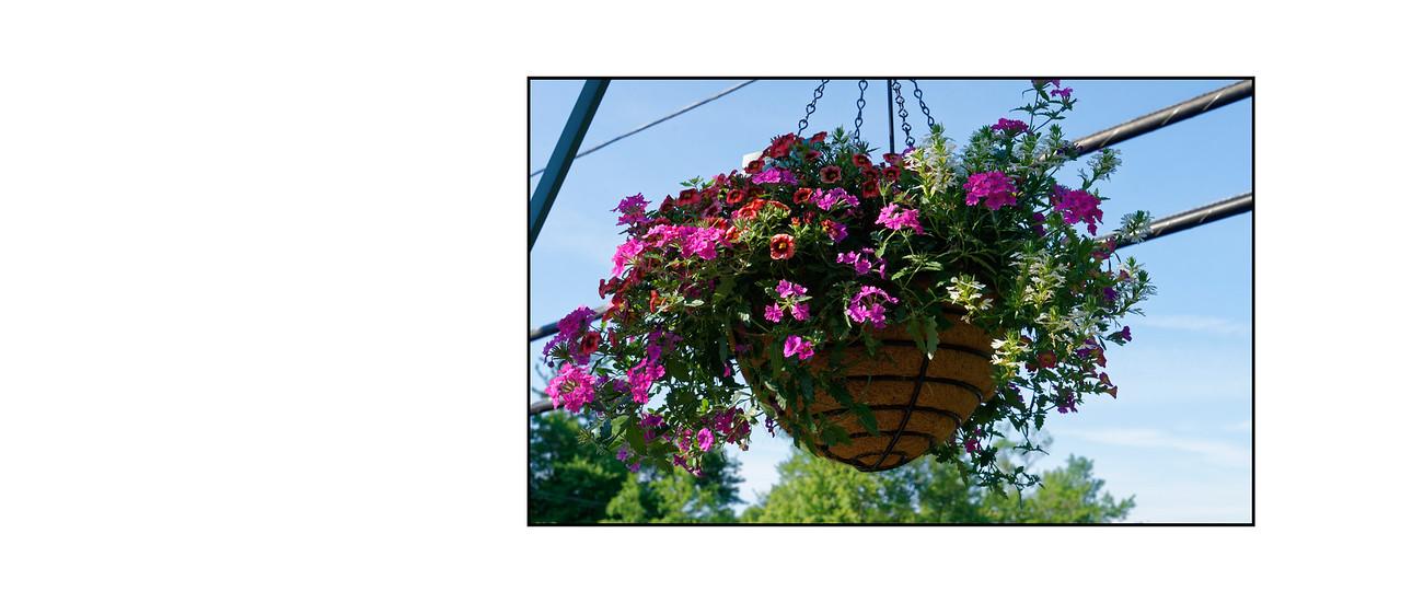 Flower_Bridge_June_2016_29