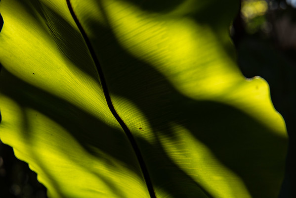 Light and shadow on a leaf