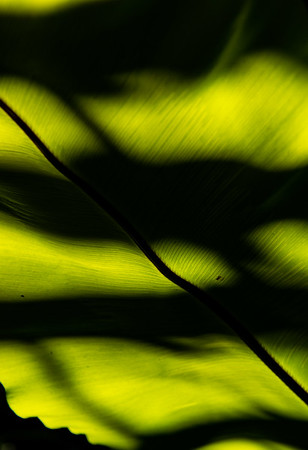 Light and shadow on leaf