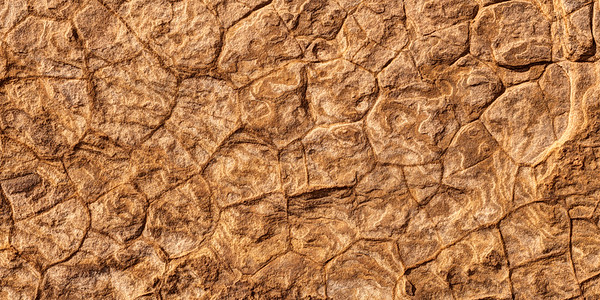 Fossliized Jurassic Sea Bed