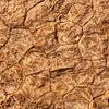 Fossliized Jurassic Sea Bed