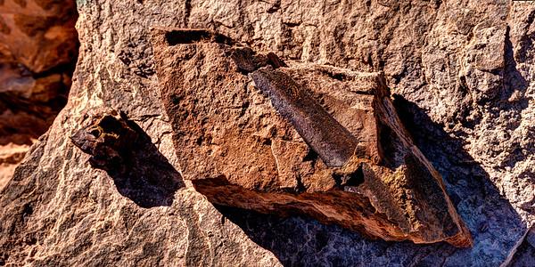 Severed Dinosaur Bone in Situ