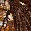 The Tree Who Attacks