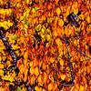 Leafy Melange