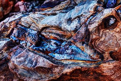 Dinosaur Bone in Situ
