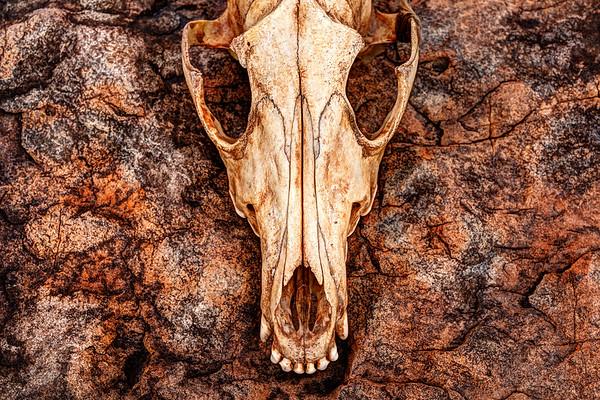 Immaculate Skull