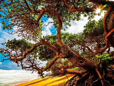 Beach Cacophony